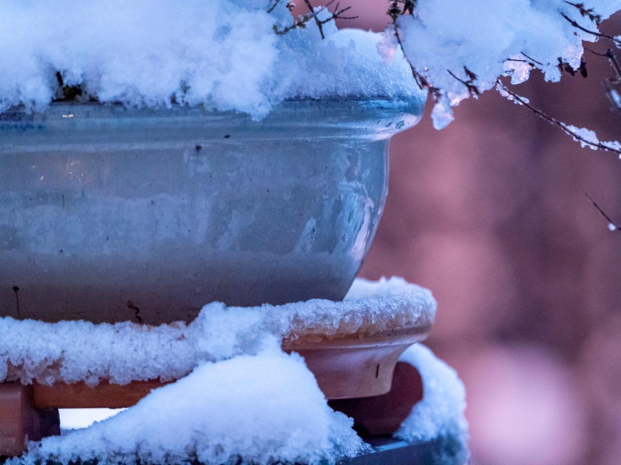 Blumentopf mit Schnee und rötlichem Bokeh am frühen Morgen