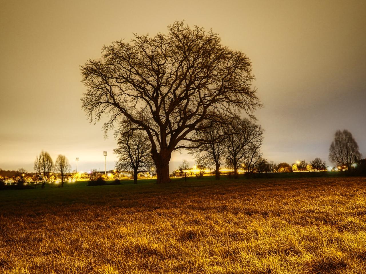 Nachtfoto von Wiese und Baum in der Aachener Soers. Im Hintergrund das Aachener Tivoli